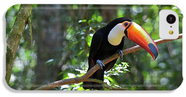 Toco Toucan (ramphastos Toco IPhone 5c Case by Andres Morya Hinojosa