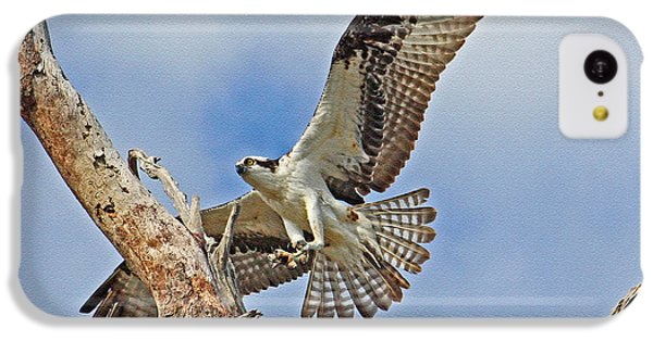 Touch Down - Osprey In Flight IPhone 5c Case
