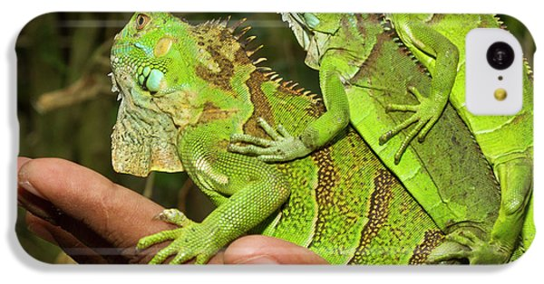 Belize iPhone 5c Case - Tourist With Juvenile Green Iguanas by William Sutton