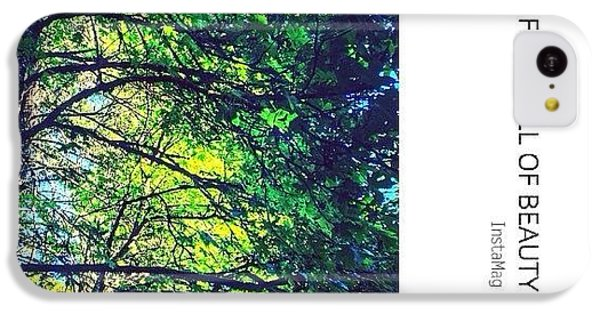 Sunny iPhone 5c Case - Tree Canopy From My Afternoon Walk by Anna Porter