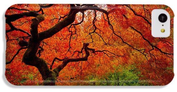 Tree Fire IPhone 5c Case by Darren  White