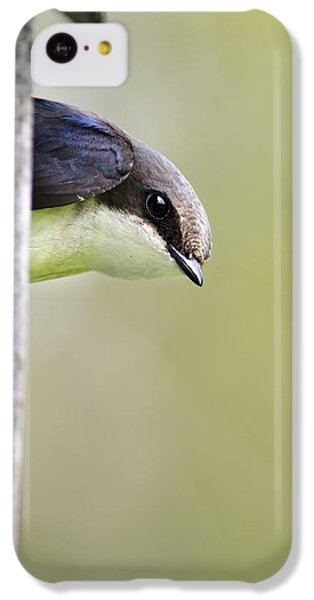 Tree Swallow Closeup IPhone 5c Case by Christina Rollo