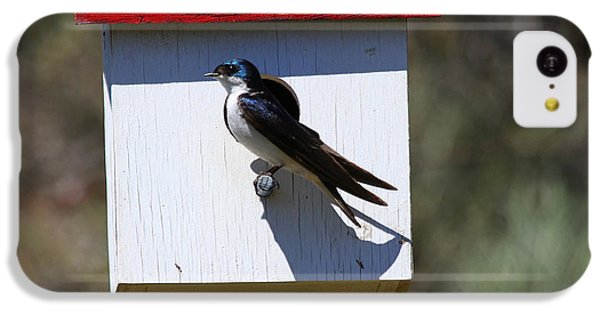 Tree Swallow Home IPhone 5c Case by Mike  Dawson