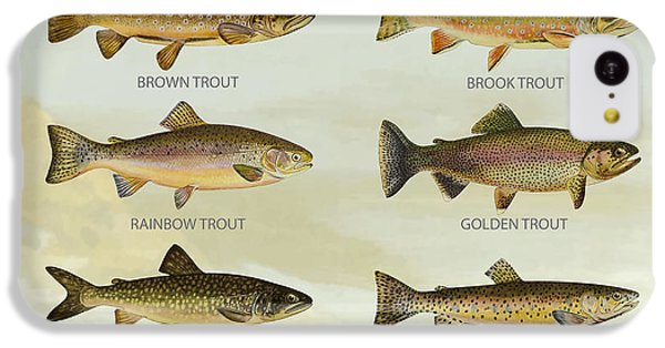 Trout Species IPhone 5c Case by Aged Pixel