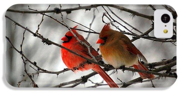 True Love Cardinal IPhone 5c Case