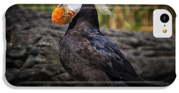 Tufted Puffin IPhone 5c Case by Mark Kiver