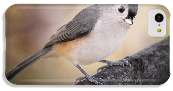 Tufted Titmouse IPhone 5c Case by Bill Wakeley