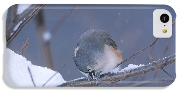 Tufted Titmouse Eating Seeds IPhone 5c Case by Paul J. Fusco