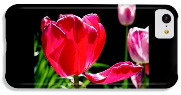 Tulip Extended IPhone 5c Case