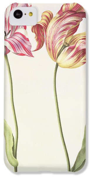 Tulips IPhone 5c Case by Nicolas Robert