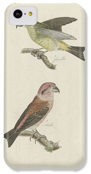 Two Crossbills, Possibly Christiaan Sepp IPhone 5c Case