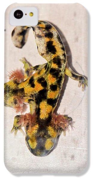 Salamanders iPhone 5c Case - Two-headed Fire Salamander by Photostock-israel