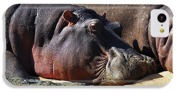 Two Hippos Sleeping On Riverbank IPhone 5c Case by Johan Swanepoel