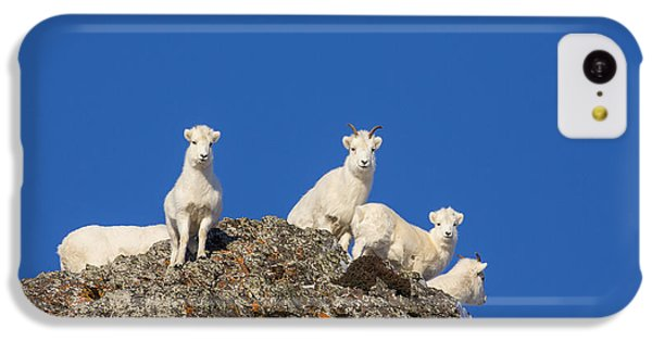Sheep iPhone 5c Case - Under The Blues Skies Of Winter by Tim Grams