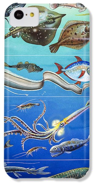 Underwater Creatures Montage IPhone 5c Case by English School