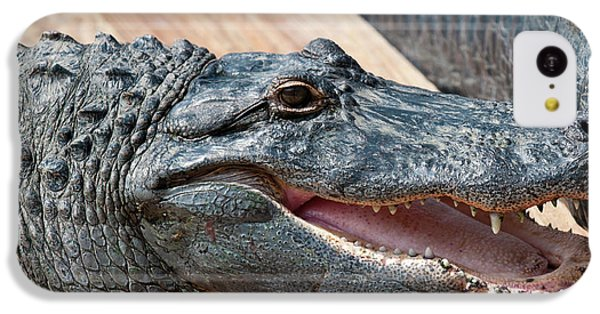 Usa, Florida Gatorland, Florida IPhone 5c Case by Michael Defreitas