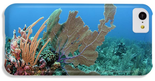 Belize iPhone 5c Case - Venus Sea Fan (gorgonia Flabellum by Pete Oxford