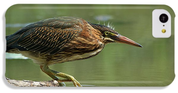 Heron iPhone 5c Case - Wading Into The Unknown by Darlene Hewson