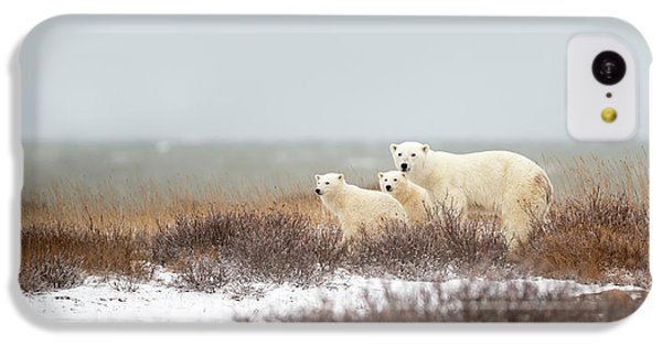 Polar Bear iPhone 5c Case - Walking On The Shore by Marco Pozzi
