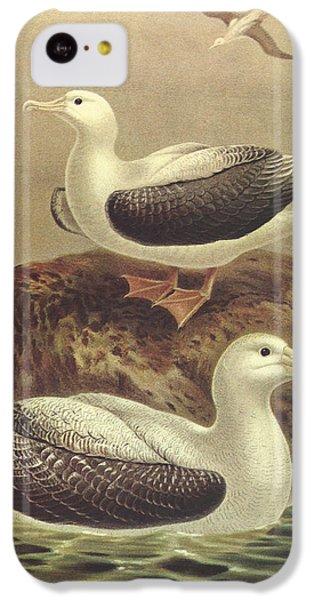 Wandering Albatross IPhone 5c Case by Rob Dreyer