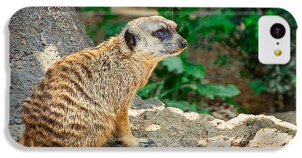Watchful Meerkat IPhone 5c Case by Jon Woodhams