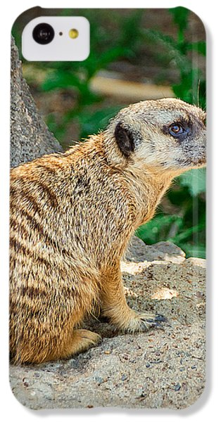 Watchful Meerkat Vertical IPhone 5c Case