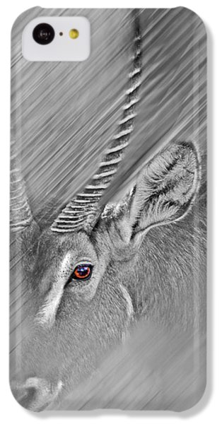 Waterbuck IPhone 5c Case by Miroslava Jurcik