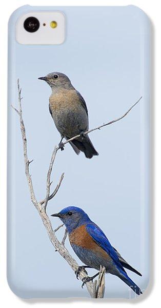 Western Bluebird Pair IPhone 5c Case