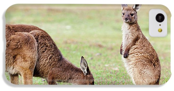 Western Grey Kangaroo (macropus IPhone 5c Case