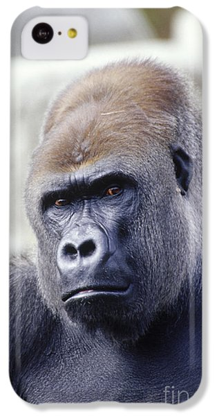 Western Lowland Gorilla IPhone 5c Case by Gregory G. Dimijian