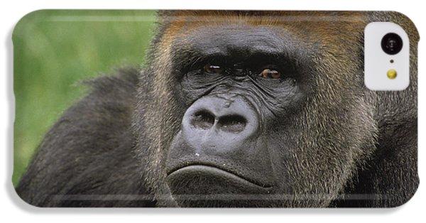 Western Lowland Gorilla Silverback IPhone 5c Case by Gerry Ellis