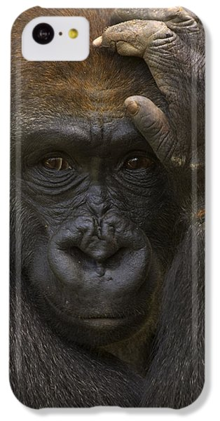 Western Lowland Gorilla With Hand IPhone 5c Case by San Diego Zoo