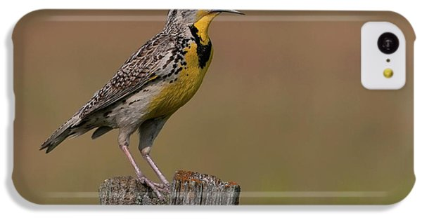 Western Meadowlark.. IPhone 5c Case