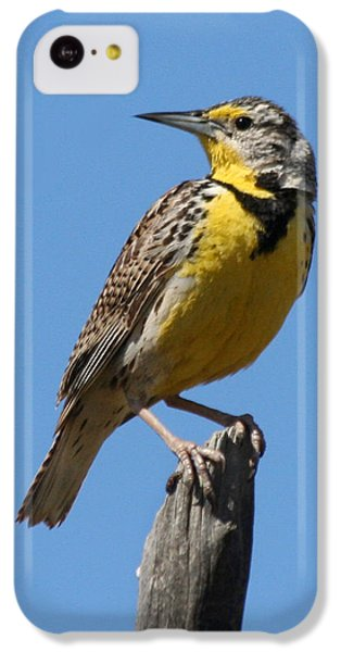 Western Meadowlark Perching IPhone 5c Case