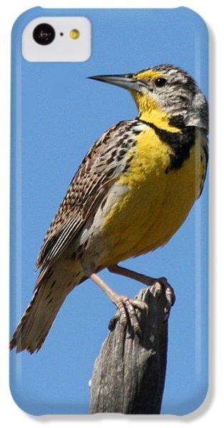 Western Meadowlark Perching IPhone 5c Case by Bob and Jan Shriner