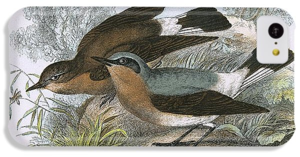 Flycatcher iPhone 5c Case - Wheatear by English School
