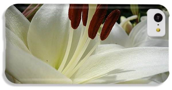 White Asiatic Lily IPhone 5c Case by Jacqueline Athmann