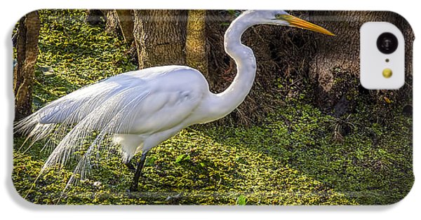 White Egret On The Hunt IPhone 5c Case