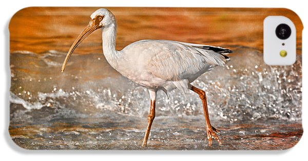 Ibis iPhone 5c Case - White Ibis Stroll by Betsy Knapp