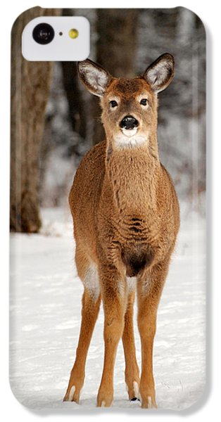 Whitetail In Snow IPhone 5c Case by Christina Rollo