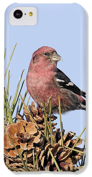 White-winged Crossbill On Pine IPhone 5c Case