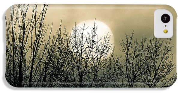 Robin iPhone 5c Case - Winter Into Spring by Bob Orsillo