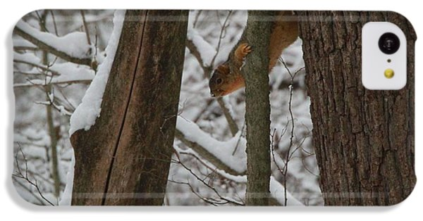 Winter Squirrel IPhone 5c Case by Dan Sproul