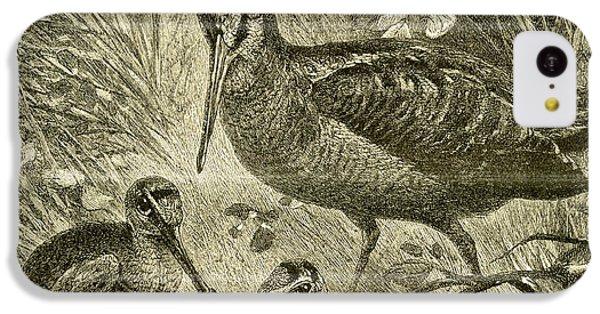 Woodcock Austria 1891 IPhone 5c Case by Austrian School