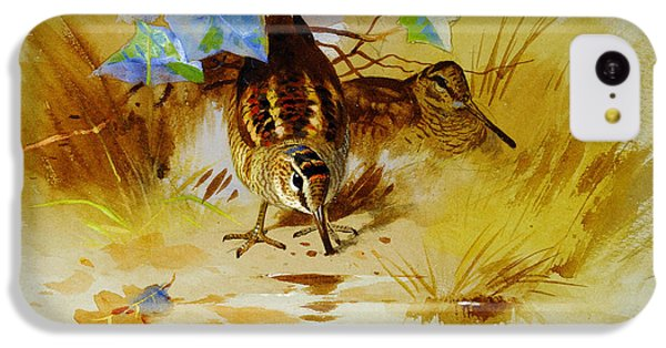 Woodcock In A Sandy Hollow IPhone 5c Case by Celestial Images