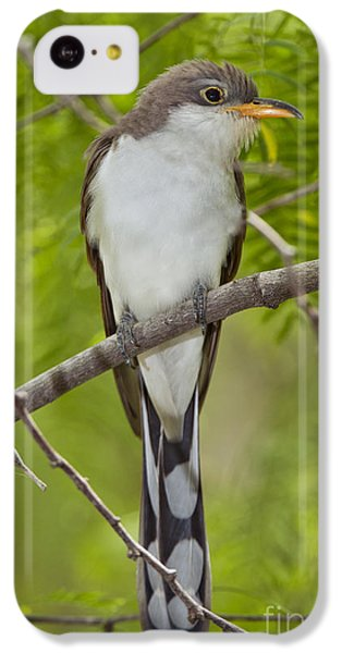 Yellow-billed Cuckoo IPhone 5c Case by Anthony Mercieca