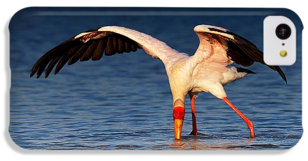 Ibis iPhone 5c Case - Yellow-billed Stork Hunting For Food by Johan Swanepoel