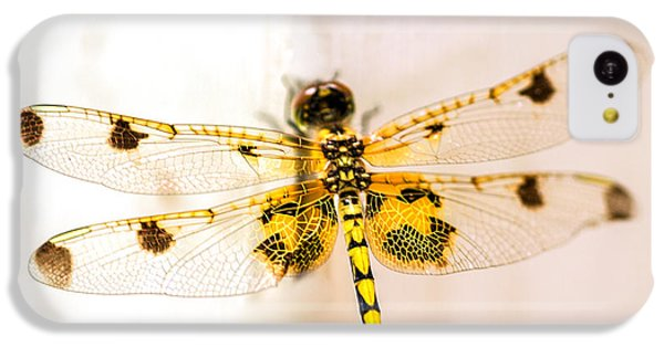 Dragon iPhone 5c Case - Yellow Dragonfly Pantala Flavescens by Iris Richardson