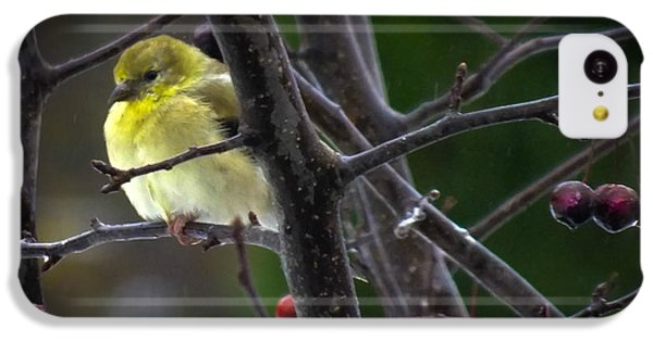Finch iPhone 5c Case - Yellow Finch by Karen Wiles