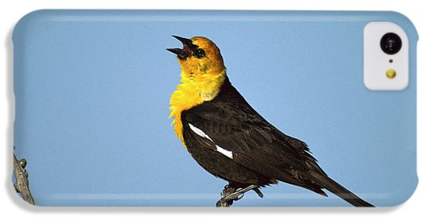 Yellow-headed Blackbird Singing IPhone 5c Case by Tom Vezo